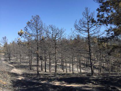 Incendio domato sulle Cesane, distrutti 200 ettari di verde – FOTO