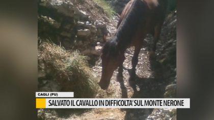 Salvato il cavallo in difficoltà sul Monte Nerone