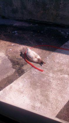 Gabbiano ferito salvato da Guardia Costiera e Cras