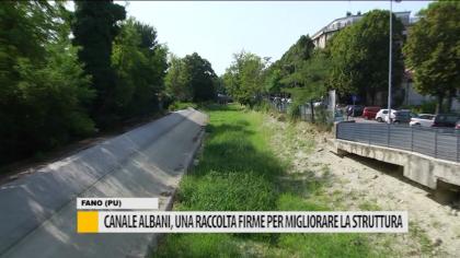 Canale Albani, una raccolta di firme per rivedere gli animali – VIDEO