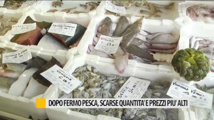 Dopo Fermo pesca, scarse quantità e prezzi più alti – VIDEO
