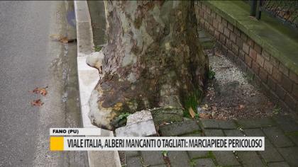 Viale Italia, alberi mancanti o tagliati: un marciapiedi pericoloso – VIDEO