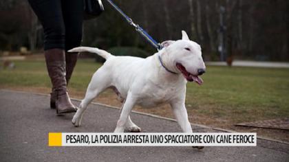 Pesaro, la polizia arresta uno spacciatore con cane feroce – VIDEO