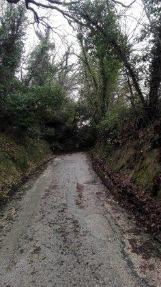 Maltempo: Pesaro Urbino, dopo la neve preoccupano frane. Chiuse alcune strade per evitare rischi poi interventi radica – VIDEO