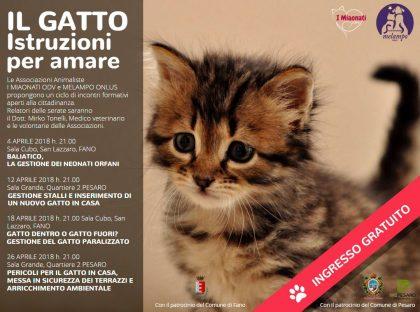 Incontri formativi per prendersi cura al meglio degli amici gatti