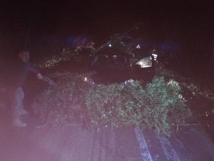 Albero cade su un'auto in transito. Tragedia sfiorata vicino Fossombrone