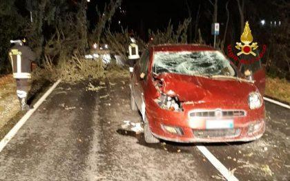 Maltempo: albero cade su auto in transito, occupanti illesi. Incidente a Osimo, vento forte e deboli nevicate nelle Marche