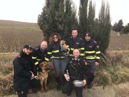 Scappano dal recinto e finiscono in autostrada. Rocky e Stellina salvati da polizia e carabinieri – VIDEO