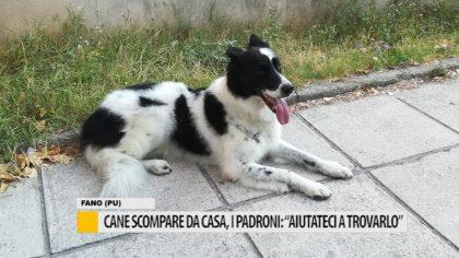 """Cane scomparso da casa, i padroni: """"Aiutateci a trovarlo"""" – VIDEO"""