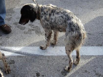 Nuova ordinanza di Ceriscioli, stop alle passeggiate. Il cane? Solo sotto casa