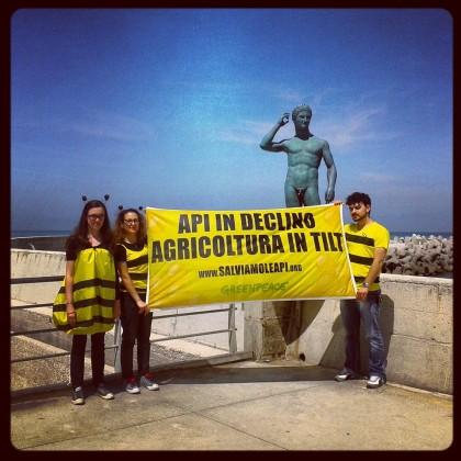 Volontari di Greenpeace in azione a Fano per salvare le api