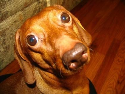 Escrementi cani non raccolti, il sindaco Ricci annuncia controlli e multe da cento euro