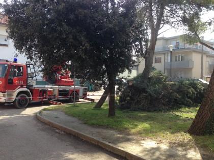 Abbattuti due pini al campus scolastico