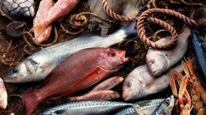 Pesca, Coldiretti apre a Fano un mercato del pesce a miglio zero