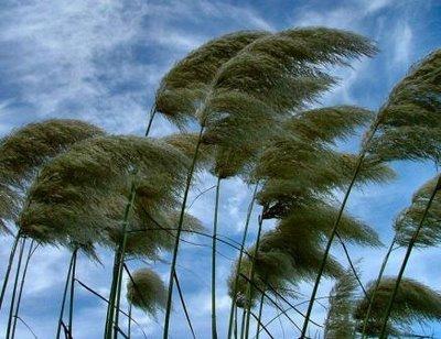 Maltempo, raffiche di vento fino a 90 chilometri orari