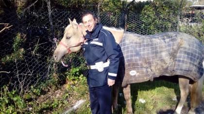 Cavallo trovato mentre vaga solo nella zona industriale. Bloccato dalla Polizia Municipale