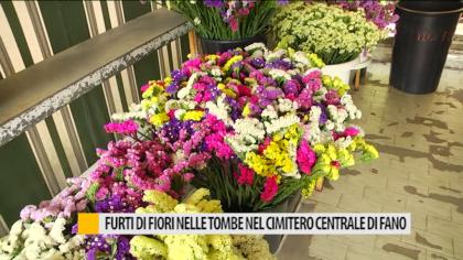 Furti di fiori nelle tombe nel cimitero centrale di Fano – VIDEO
