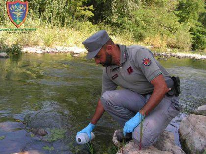 Sversamento di sostanze pericolose nel fiume Foglia: contaminato il fosso di Ca' Bargiano – VIDEO