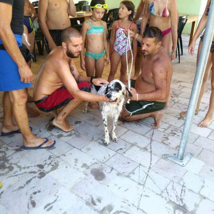 Nuotava al largo a Baia Metauro, salvato cane da caccia: rintracciato il proprietario