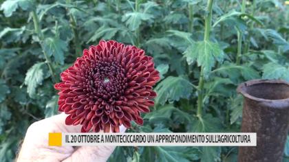 """Il 20 ottobre a Monteciccardo """"In natura come nella società, l'evoluzione positiva"""" – VIDEO"""