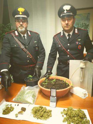 San Lorenzo in Campo, coltivava marijuana nel garage: arrestato un artigiano