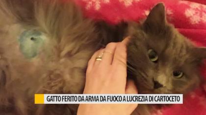 Gatto ferito da arma da fuoco a lucrezia di Fano – VIDEO