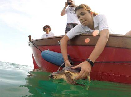 Fano, la tartaruga Michi torna il libertà. Ecco quando e dove