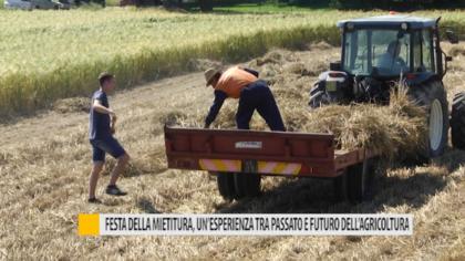 Festa della Mietitura, un'esperienza tra passato e futuro dell'agricoltura – VIDEO