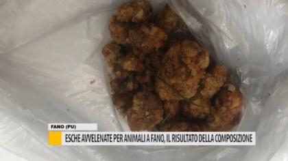 Esche avvelenate per animali a Fano, il risultato della composizione – VIDEO
