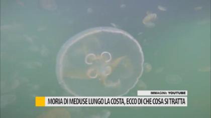 Moria di meduse lungo la costa, ecco di che cosa si tratta – VIDEO