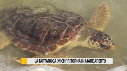 "La tartaruga ""Michi"" ritorna in mare aperto a Fano – VIDEO"