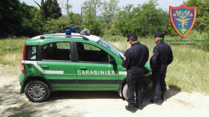 Carabinieri Forestali, tutela ambientale: tre denunciati ed un terreno sequestrato