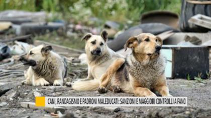 Randagismo e proprietari maleducati: sanzioni e maggiori controlli a Fano – VIDEO