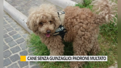 Cane senza guinzaglio: padrone multato – VIDEO