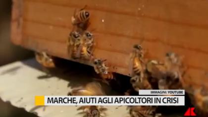 Marche, approvata mozione per aiutare gli apicoltori in crisi – VIDEO