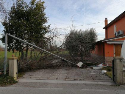 Vento di tempesta abbatte alberi e piega un palo della luce a Bellocchi